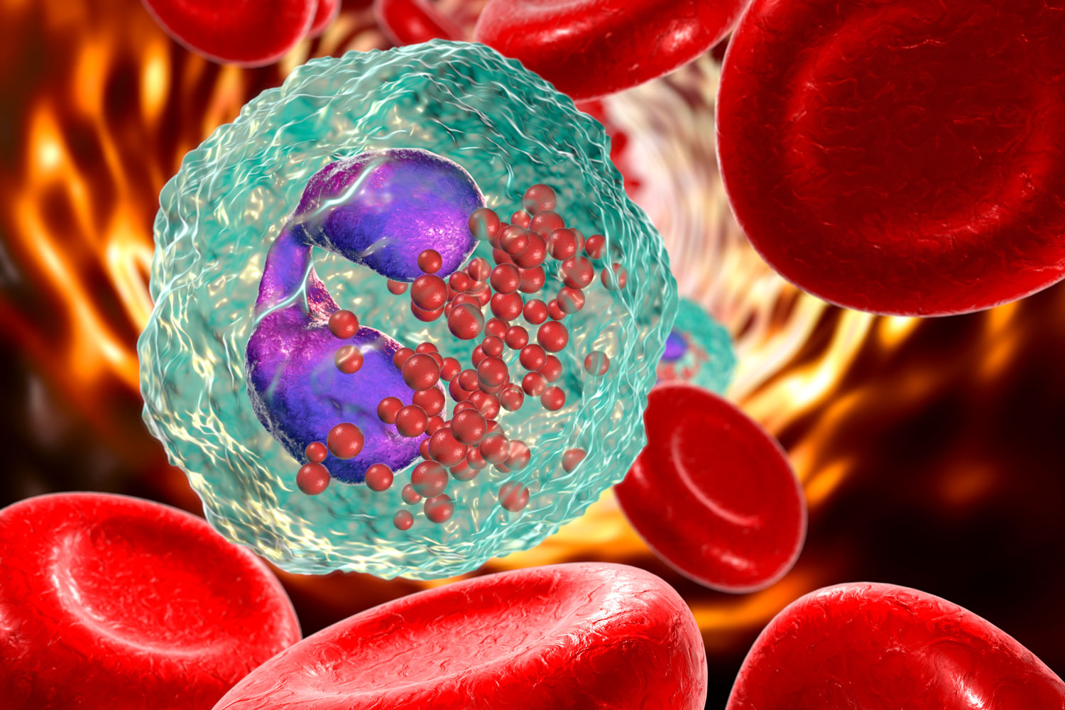 Eosinophil-in-blood,-a-white-blood-cell